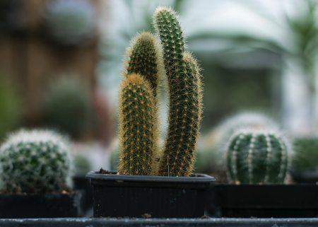 Cactus and chilli festival at the Urban Jungle