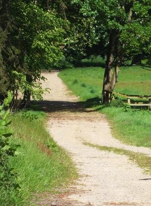 The Course at the Henham Park Festival of Running
